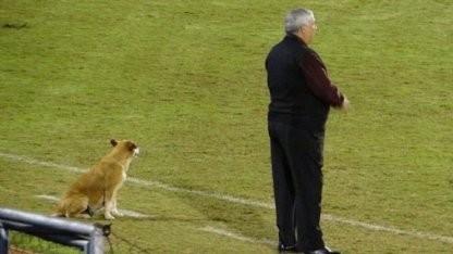 真-足球狗!巴拉圭球队主帅喜提