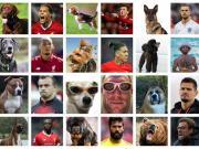 红军球迷看过来,红军众将专属狗子表情包。洛夫伦这...