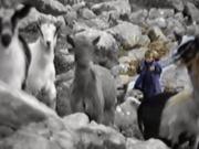 莫德里奇儿时真的放过羊吗?探寻这张照片背后的故事